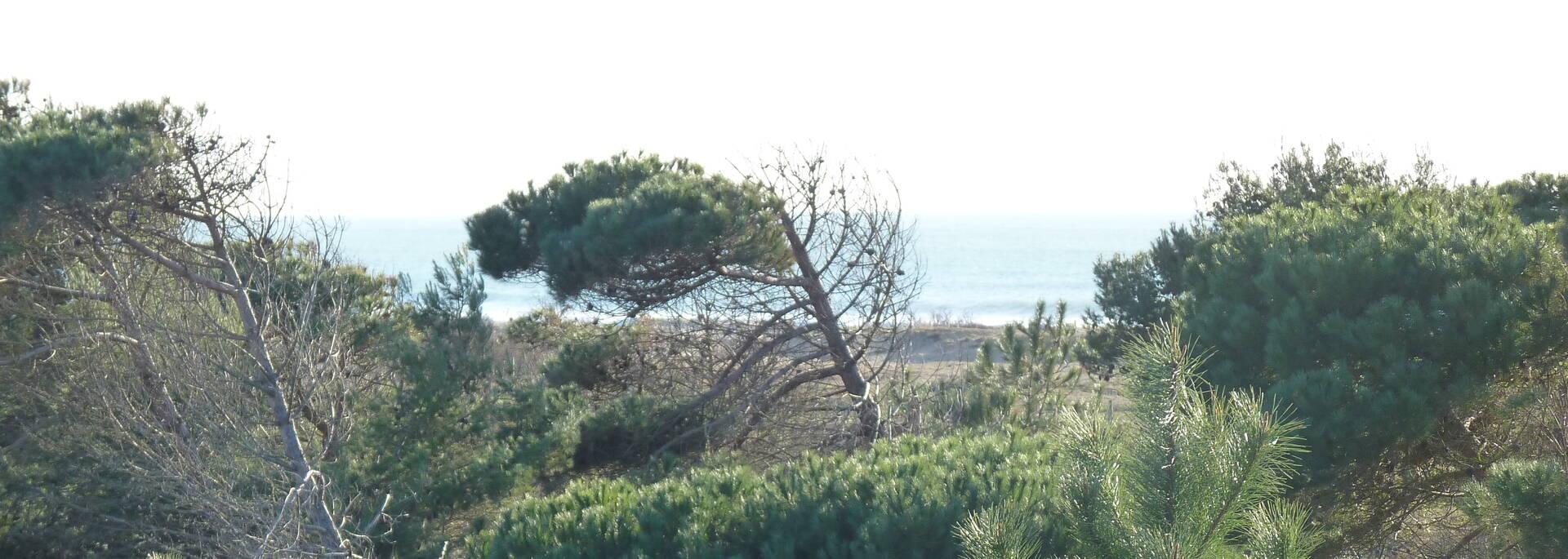 Zugang zum Strand bei Boyardville