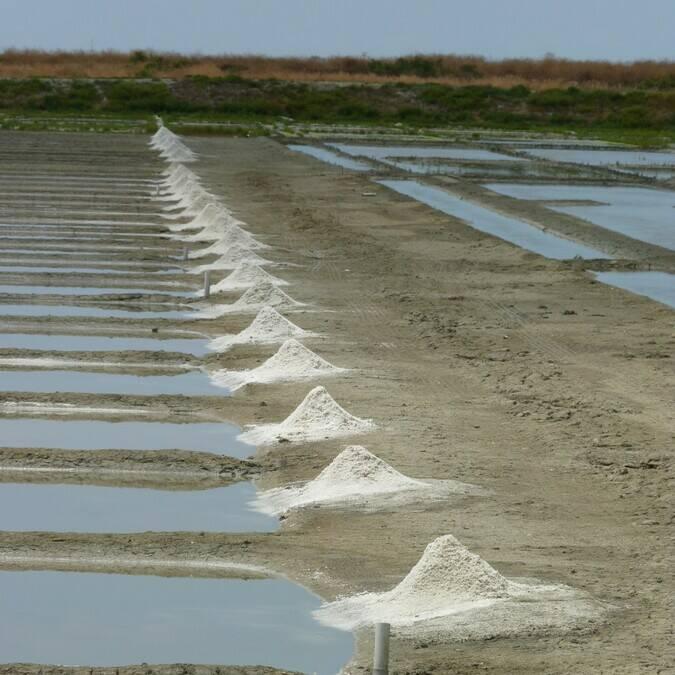 Salzfelder auf der Ile de Ré © FDHPA 17